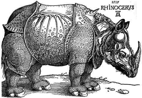 durer_-_rhinoceros.jpg